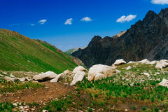 Beautiful view of alpine meadows Royalty Free Stock Images