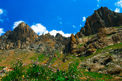 Beautiful view of alpine meadows Royalty Free Stock Photography