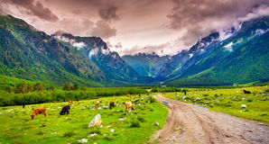 Beautiful view of alpine pasture. Royalty Free Stock Photos