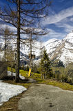 Beautiful view of Alps mountains and pine tree forest. Spring in National Park Hohe Tauern, Austria. Royalty Free Stock Photo