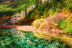 Beautiful view of amazing river with crystal clear water Stock Images