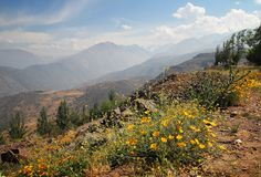 Andes mountains with flowers Stock Images