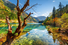 Beautiful view of the Arrow Bamboo Lake among fall woods Stock Images