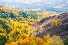 Beautiful view of autumn forest. In the mountains Royalty Free Stock Photo