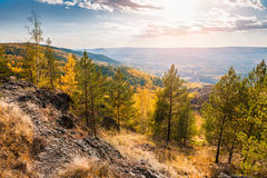 Beautiful view of autumn forest Stock Images