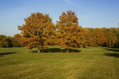 Autumn trees, full of leaves. royalty free stock photos
