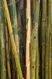 Beautiful View in Bamboo Forest Royalty Free Stock Photo