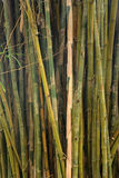 Beautiful View in Bamboo Forest Stock Images