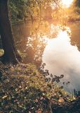 Beautiful view from behind the trees to a pond surface. royalty free stock photos
