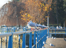 Beautiful view of birds on railing, Lovere, Lake Iseo, Italy Stock Photo
