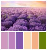 Beautiful view of blooming lavender field. Natural color palette for interior or fashion design. And art royalty free stock image