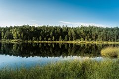 Beautiful view of a blue-eyed lake, located in a pine forest, sunlight highlights trees and grass Stock Photo