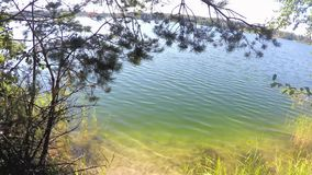 Beautiful view of blue lake near trees. And grass stock video