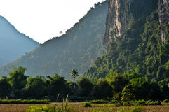 Beautiful view from the bottom of a cliff face. Rice field  with Trees on Mountain and cliff face Stock Image