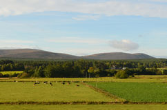 Beautiful View of the Cairngorm Mountains with Fields Royalty Free Stock Image