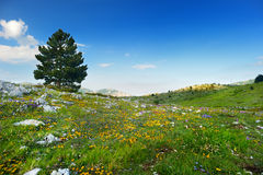 Beautiful view of Campo Imperatore plateau Stock Photography