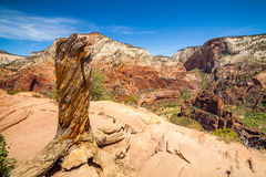 Beautiful view of canyon in Zion National Park. Stock Images