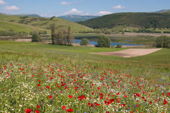 Beautiful view of Colfiorito lake with red poppies, cornflowers and daisies Royalty Free Stock Image