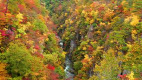 Beautiful view of colorful autumn foliage at the forest of Naruko Gorge