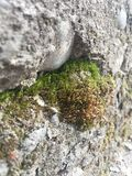 Beautiful view on the combination of stone and moss. royalty free stock images