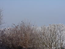 The beautiful view on the covered tree by snow royalty free stock photos