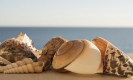 Beautiful view different sized multicolored seashells on a background of blue sea stock photography