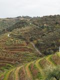 The beautiful view douro region vineyards  portugal. The beautiful view douro region vineyards stock photography