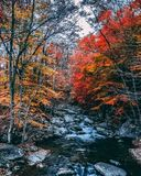 Autumn mountain stream landscape view. Blue Ridge Mountains in Fall. royalty free stock photography