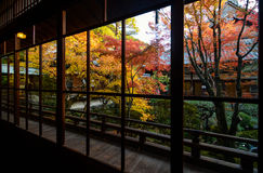 Beautiful view of fall maple trees through big framed windows in Kyoto, Japan Stock Photos