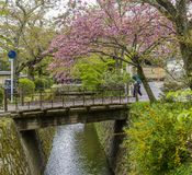 Beautiful view of the famous Philosopher`s path of Kyoto, Japan, in the spring season royalty free stock image
