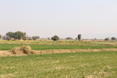 A beautiful view of fields in the country of Punjab. A beautiful view of fields and crops in the country of Punjab, india, Pakisan, asia, africa, europe Royalty Free Stock Image