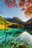 Scenic view of the Five Flower Lake among colorful fall woods royalty free stock photography