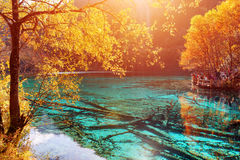 Beautiful view of the Five Flower Lake Multicolored Lake Stock Photography