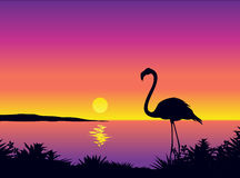 Beautiful view with flamingo. Tropical sea scene – vector illustration Stock Photo