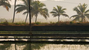 Beautiful view of flooded rice paddy field with a road during sunrise in India stock video footage