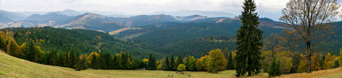 Beautiful view of the forest in Carpathians Royalty Free Stock Photos
