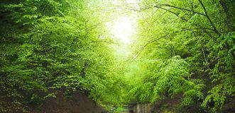 Beautiful view. Forest in spring royalty free stock photography