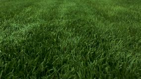 Beautiful view of front yard of private garden. Green grass lawn. stock video footage
