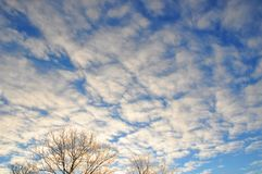 Beautiful view on frosty morning sun rise sky with clouds. And trees top Stock Photos