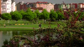 Beautiful view of the German village. Green square with a lake and views of the city landscape.Green trees near the lake. German village stock footage