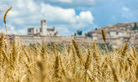 Beautiful view of golden harvest field and blurred town of Assisi in the background, Umbria, Italy Royalty Free Stock Image