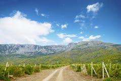 Beautiful view grape vine Stock Photo