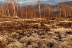 Beautiful view at grass heather and landscape woods at sunset in. Spring or autumn mountains,  space for text Royalty Free Stock Photo