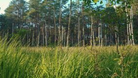 View of the fresh green grass and trees in the forest. Beautiful view of the grass and trees in the forest in summer stock video