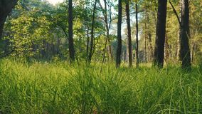 View of the fresh green grass and trees in the forest. Beautiful view of the grass and trees in the forest in summer stock footage
