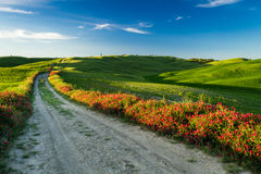 Beautiful view of green fields and meadows at sunset in Tuscany stock images