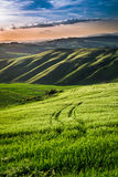 Beautiful view of green fields and meadows at sunset in Tuscany Stock Photography