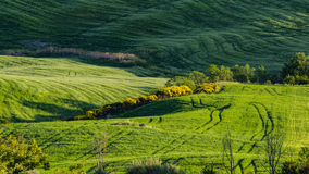 Beautiful view of green fields and meadows at sunset in Tuscany Stock Photos
