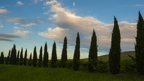 Beautiful view of green fields and meadows at sunset in Tuscany Royalty Free Stock Image