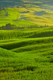 Beautiful view of green fields in Tuscany Stock Image